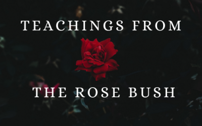 Teachings from the Rose Bush